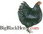 BigBlackHen.com, SG12