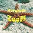 Hurghada-Zoom logo
