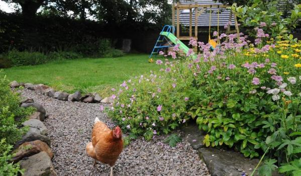Chicken running through a pretty garden