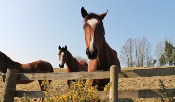 Horses looking for attention in their paddock