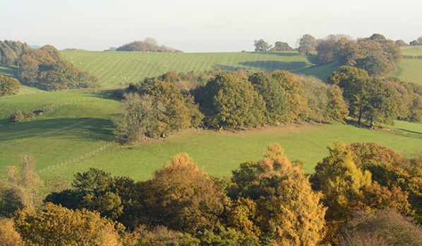 Rolling green hills of Surrey