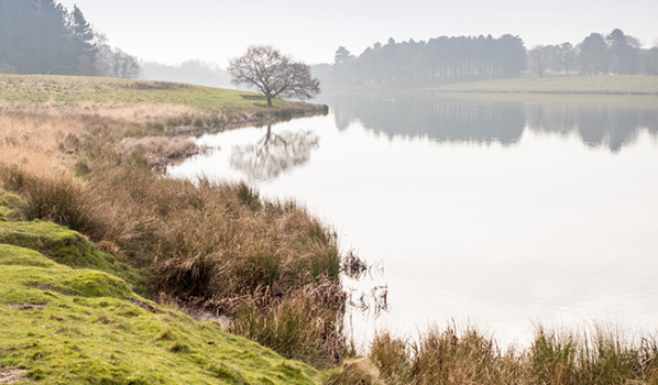 A misty Tatton Park in Cheshire