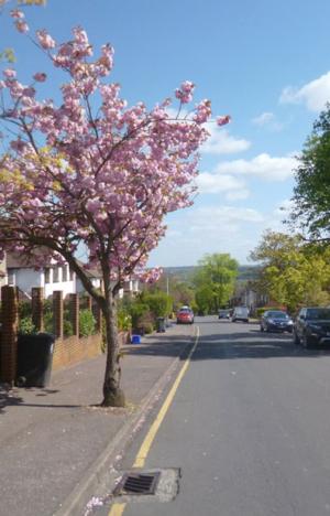 A street in Buckhurst Hill