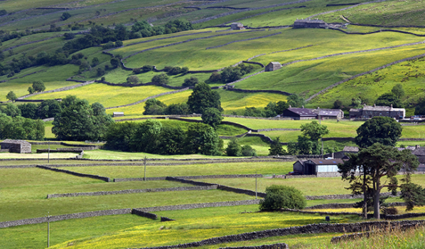 Farmland in the Yorkshire Dales