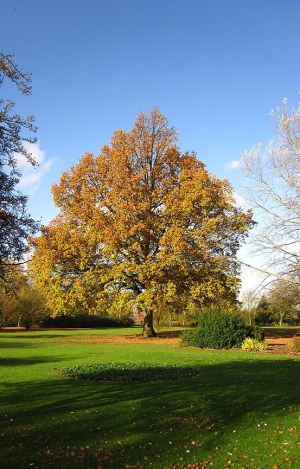 Ravenor Park in the Autumn