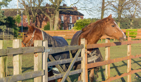 Horses in a paddock in Bawtry, South Yorkshire