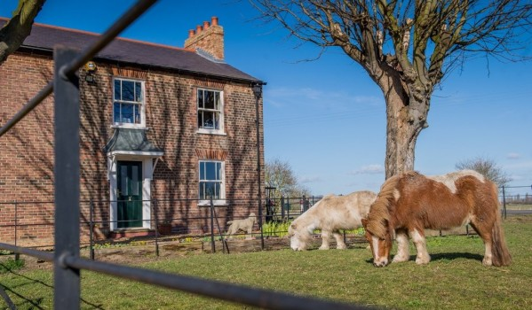 Farmhouse with ponies in Tydd St. Giles, Cambridgeshire