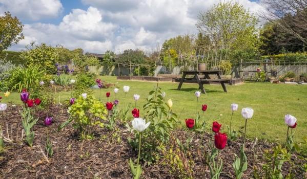 Tulips in bloom in Great Oakley garden