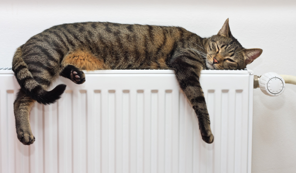 Cat sleeping on radiator, pet friendly property