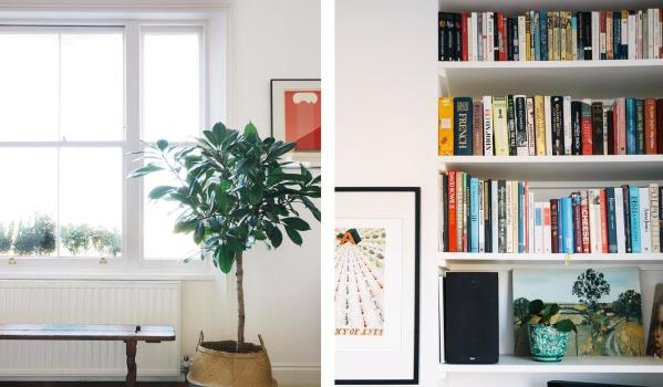 Shelves with plants and books