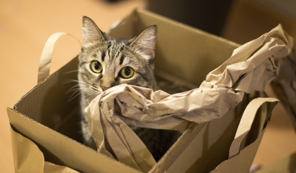 Move on a weekend and you might receive some help with your unpacking