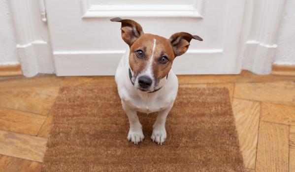 Dog sat by the front door